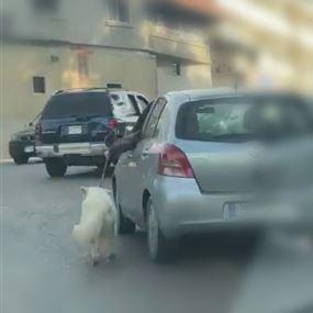 بالصورة: هذا مصير الشخص الذي جرّ كلبه بجانب سيارته