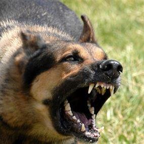 كلب مسعور يهاجم 6 أشخاص قبل أن يتم قتله