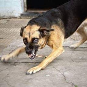 كلب شارد هاجم 3 مواطنين وأصابهم بجروح مختلفة