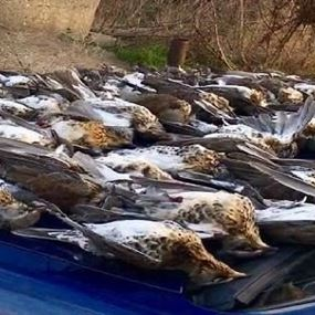 تباهى باصطياد 217 طيراً... فنال عقابه وفق القانون اللبناني!