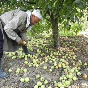 أين مستحقات مزارعي التفاح؟