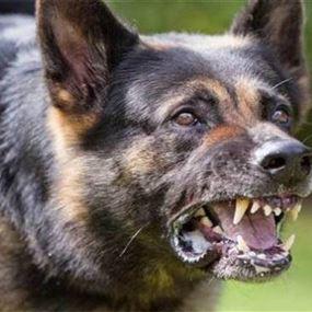 اصيبت بصدمة عصبية بعدما هاجمتها كلاب شاردة