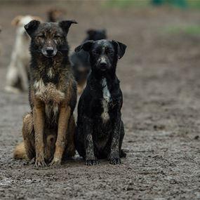 علماء الأحياء يكشفون أيهما أذكى الكلب أم الذئب