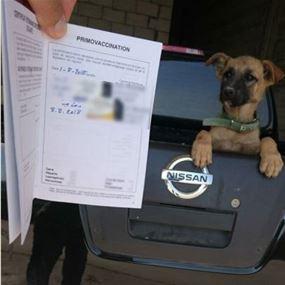 توضيح من قوى الأمن حول حادثة سحل كلب في الفرزل