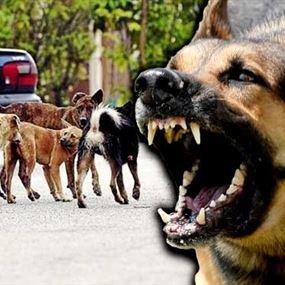 ازدياد داء الكلب في لبنان.. ووزارة الصحة تحذر