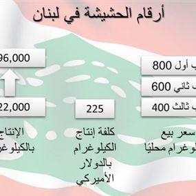 زراعة الحشيشة في لبنان بالأرقام