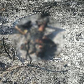 الياس توفي حرقاً في أرضه!