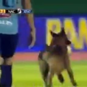 بالفيديو.. كلب يقتحم ملعب مباراة ويخطف الكرة من اللاعبين