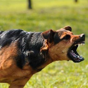 وزارة الصحة تدعو البلديات لمعالجة قضية الكلاب الشاردة