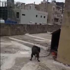 في سد البوشرية كلب يُدرّب على الشراسة بإطعامه جراء وقطط!