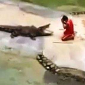 بالفيديو: استعراض ينتهي بكارثة.. تمساح يغلق فمه على رأس مغامر