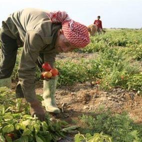 تحذير من مبيد زراعي يستعمله بعض المزارعين