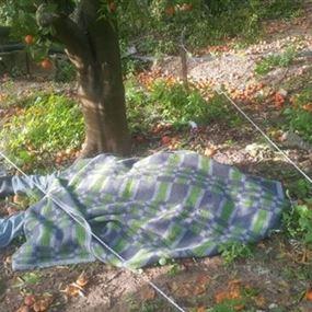 بالصورة.. توفي أثناء عمله في البستان