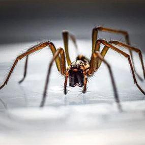 عنكبوت ينسج شبكته داخل أذن امرأة.. (فيديو)