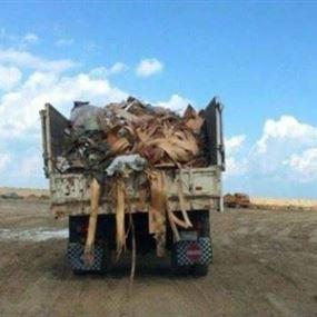 احباط ادخال حمولة 400 شاحنة من النفايات الى صيدا