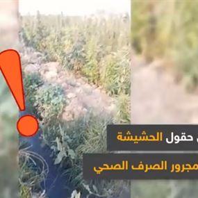 بالفيديو: حقول الحشيشة في لبنان تُروى من الصرف الصحي