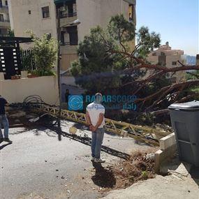 بالصور: سقوط شجرة وعامود للكهرباء داخل حي سكني في جعيتا