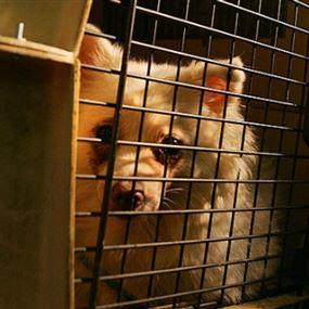 السجن لرجل ألقى بكلبه من الطابق السابع